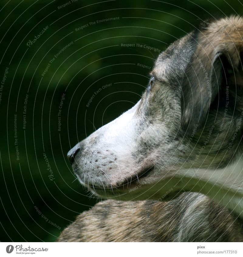 Dog Nature Beautiful Green White Calm Animal Environment Dream Brown Wait Pelt Animal face Pet Harmonious Smart