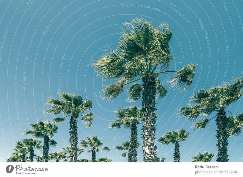 Green Palm Trees On Clear Blue Sky Exotic Vacation & Travel Summer Sun Beach Island Environment Nature Landscape Plant Cloudless sky Wind Leaf Movement Natural