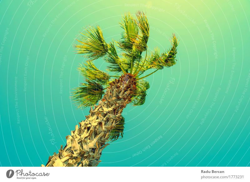 Green Palm Tree On Clear Blue Sky Exotic Vacation & Travel Summer Sun Beach Island Environment Nature Landscape Plant Cloudless sky Wind Natural Multicoloured