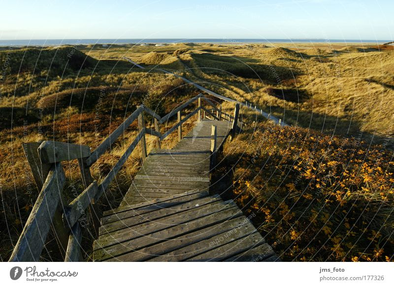 The staircase to the sea Colour photo Exterior shot Deserted Evening Shadow Deep depth of field Bird's-eye view Nature Landscape Sky Autumn Grass Hill Coast