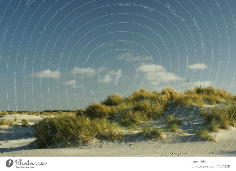 Sky Green Blue Plant Beach Clouds Far-off places Grass Sand Landscape Brown Weather Island Hill Amrum