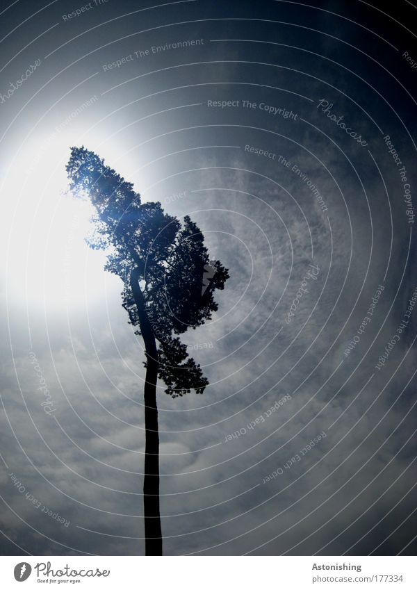 Nature Sky White Tree Sun Blue Plant Summer Black Clouds Dark Bright Weather Environment Tall Illuminate