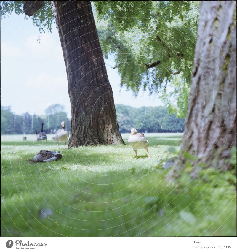 Nature Tree Animal Relaxation Environment Meadow Grass Freedom Happy Park Together Contentment Lie Wild Natural