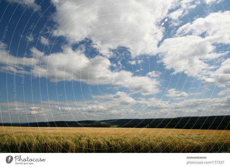Nature Sky Sun Blue Plant Summer Clouds Far-off places Grass Mountain Spring Warmth Landscape Air Power Field