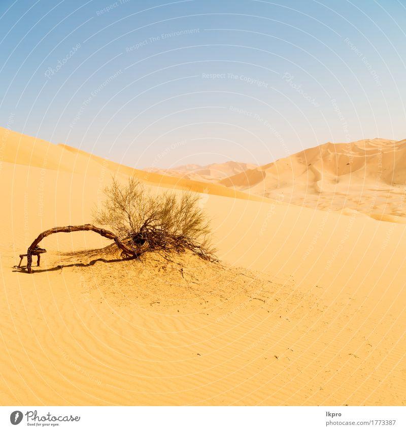 outdoor sand dune in oman old desert rub al khali Sky Nature Vacation & Travel Summer Beautiful White Sun Landscape Loneliness Black Yellow Gray Stone Sand Rock