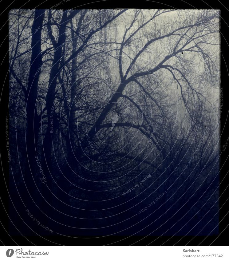 Nature Tree Winter Loneliness Forest Dark Cold Death Sadness Landscape Fog Environment Crazy Grief Threat Branch