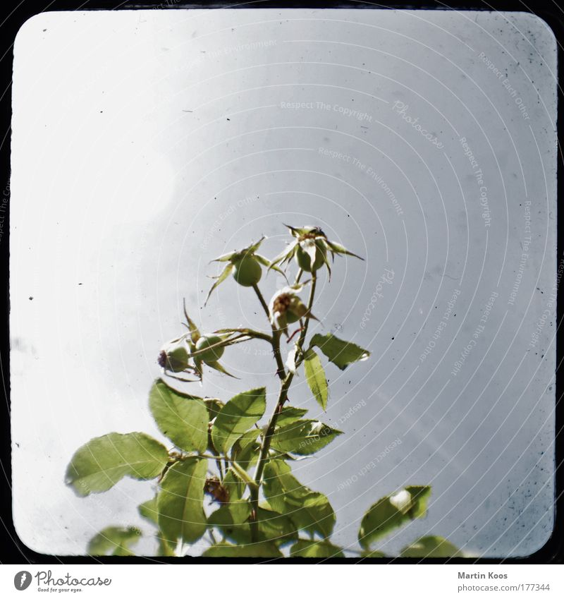 Old Flower Green Blue Plant Leaf Emotions Blossom Gray Star (Symbol) Esthetic Growth Gloomy Bushes Uniqueness Point