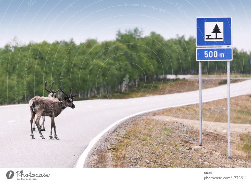 Without rest and quietness Adventure Expedition Environment Nature Landscape Plant Animal Street Lanes & trails Road sign Farm animal Wild animal Reindeer 2