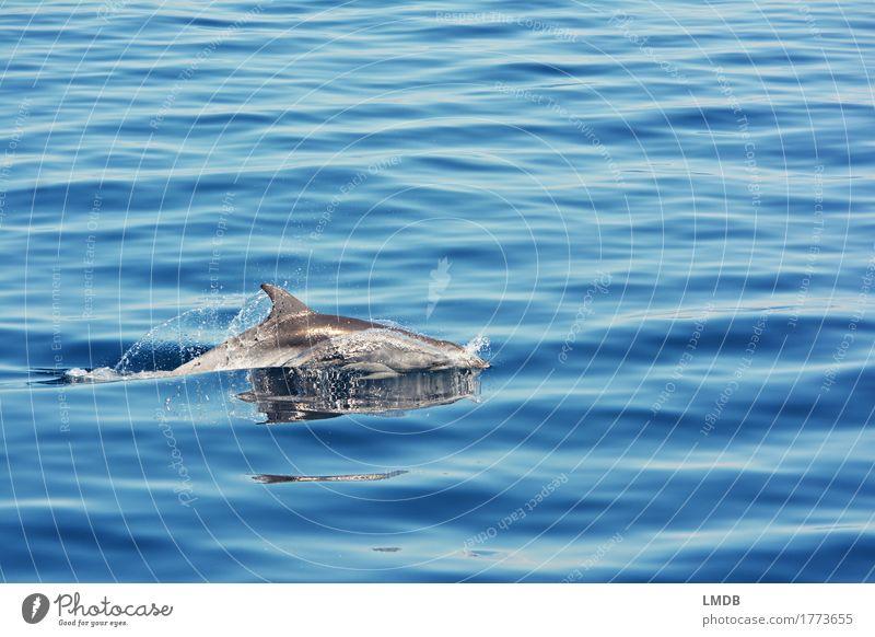 Nature Blue Water Ocean Animal Joy Environment Life Freedom Swimming & Bathing Contentment Elegant Waves Wild animal Esthetic