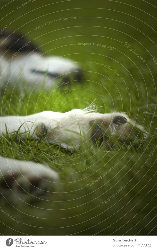Nature Beautiful Green Calm Loneliness Animal Life Relaxation Grass Dream Dog Contentment Moody Sleep Perspective Safety
