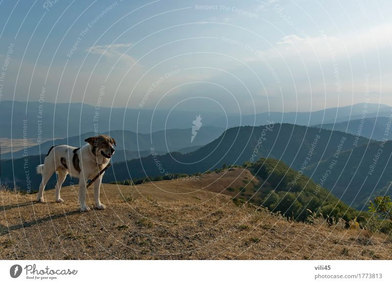 Central Balkan mountain with shepherd dog Sky Dog Nature Plant Summer Tree Landscape Clouds Animal Forest Mountain Natural Grass Happy Horizon Stand