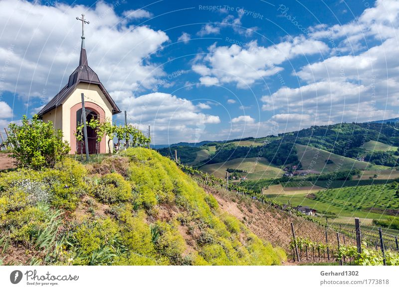 Marien chapel in the vineyard near Oberkirch in the Black Forest Vacation & Travel Tourism Trip Mountain Hiking Vine Relaxation Tradition Vineyard Ortenaukreis