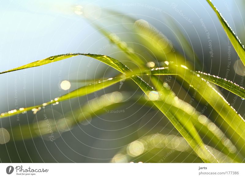 Sky Nature Green Plant Summer Landscape Movement Grass Air Weather Natural Climate Energy Fresh Drops of water Dynamics