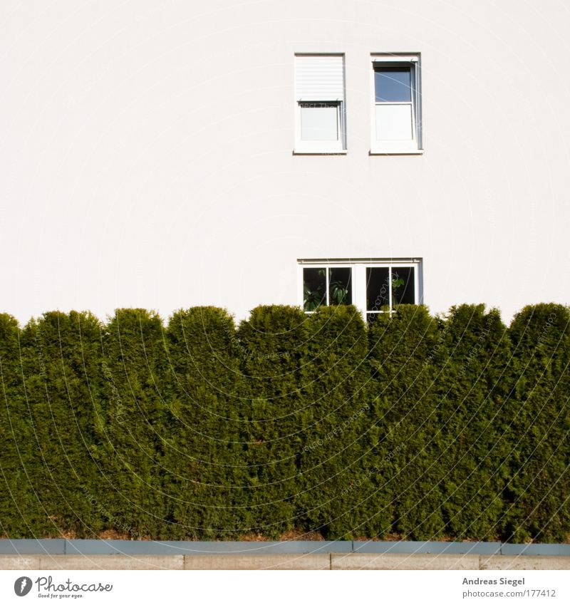 hedge window Colour photo Exterior shot Deserted Copy Space left Copy Space top Copy Space bottom Day Lifestyle Design Living or residing Flat (apartment)
