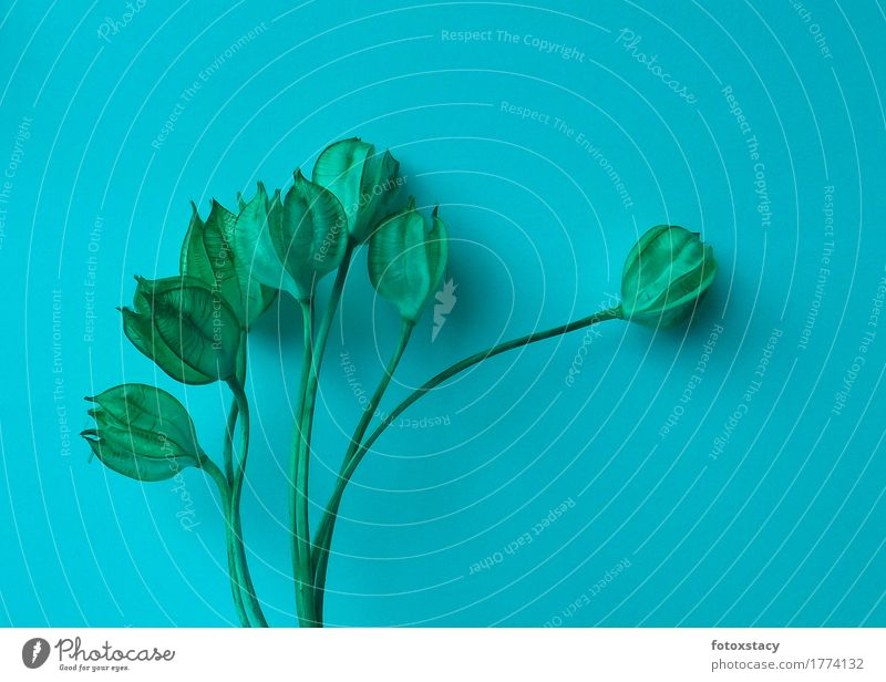 Plant Calm Environment Style Exceptional Moody Growth Elegant Esthetic Beginning Hope Dry Turquoise Seed Surrealism Tulip