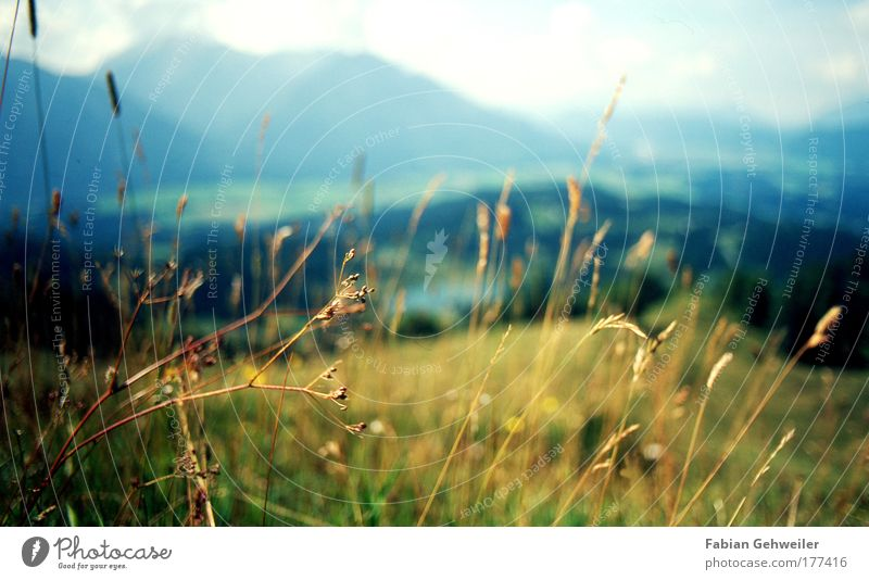 Nature Plant Summer Far-off places Relaxation Meadow Mountain Landscape Grass Warmth Contentment Power Elegant Trip Tourism Happiness