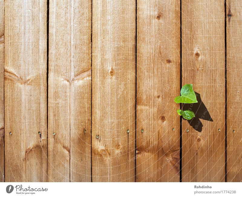 breakthrough Summer Plant Ivy Wall (barrier) Wall (building) Wood Uniqueness Brown Yellow Green Optimism Wooden board Column Cervasse Breach Freedom Power Line