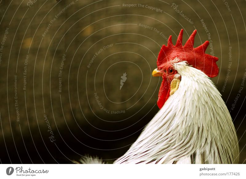 Nature Beautiful White Red Animal Yellow Think Power Might Animal face Wing Observe Natural Brave Pet Beak