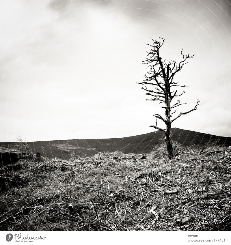 Tree Plant Loneliness Dark Cold Death Mountain Wood Sadness Landscape Rock Fire Grief Bushes Threat Change