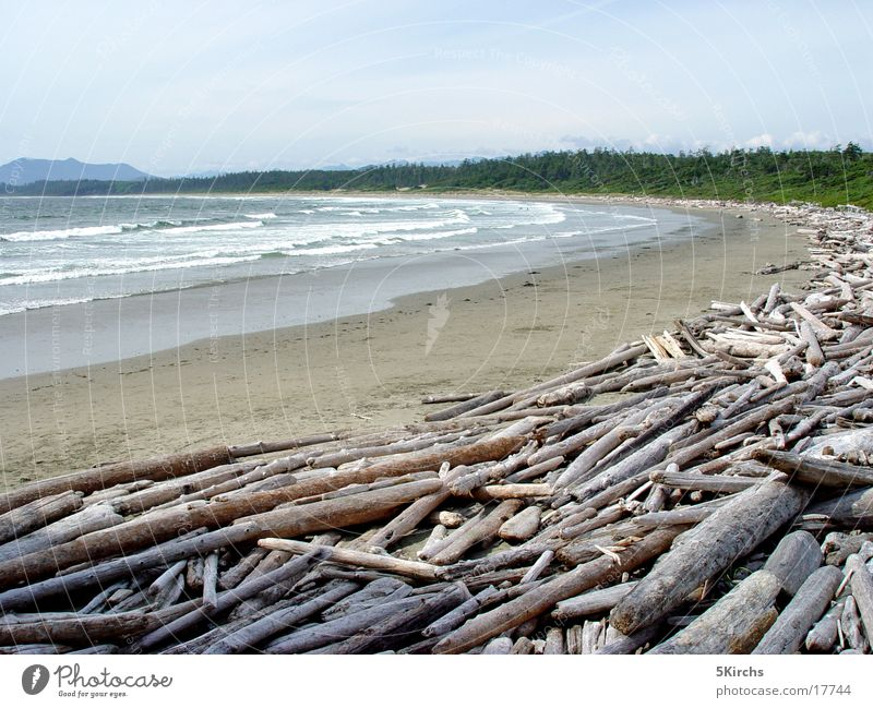 Long Beach Driftwood Vancouver Island Canada Ocean Wood