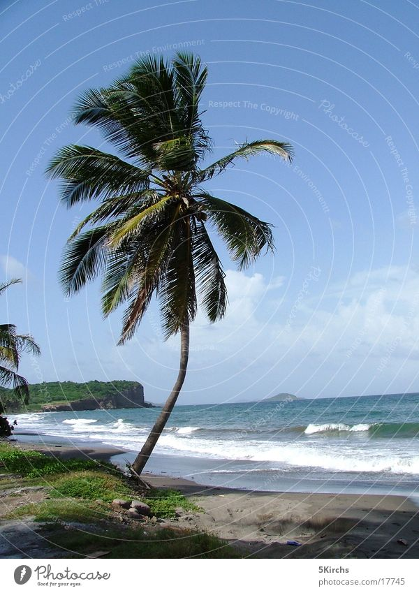 The perfect palm tree Ocean Beach Palm tree Tobago Lesser Antilles Vacation & Travel Wind