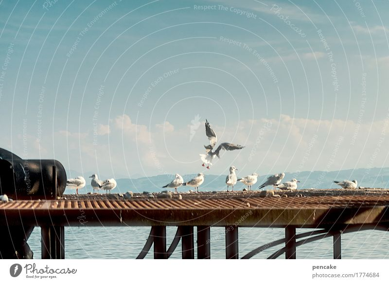 Sky Water Landscape Lake Flying Bird Contentment Happiness Group of animals Beautiful weather Bridge Roof Lakeside Alps Harbour Seagull