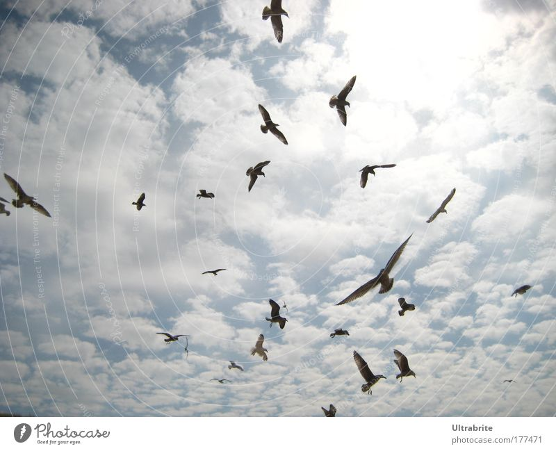 Sky Blue White Summer Clouds Animal Life Movement Air Bird Elegant Flying Speed Esthetic Wing Group of animals