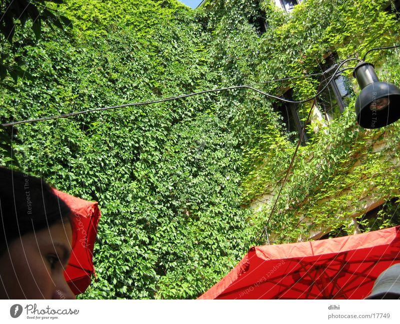 Wild Wine Romance Backyard proliferate rich green ranched house