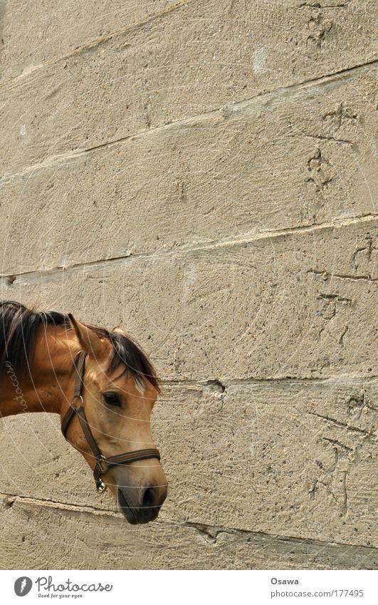 Animal Wall (building) Head Gray Wall (barrier) Concrete Horse Pelt Crockery Mammal Mane Portrait format Cement Halter Horse's head