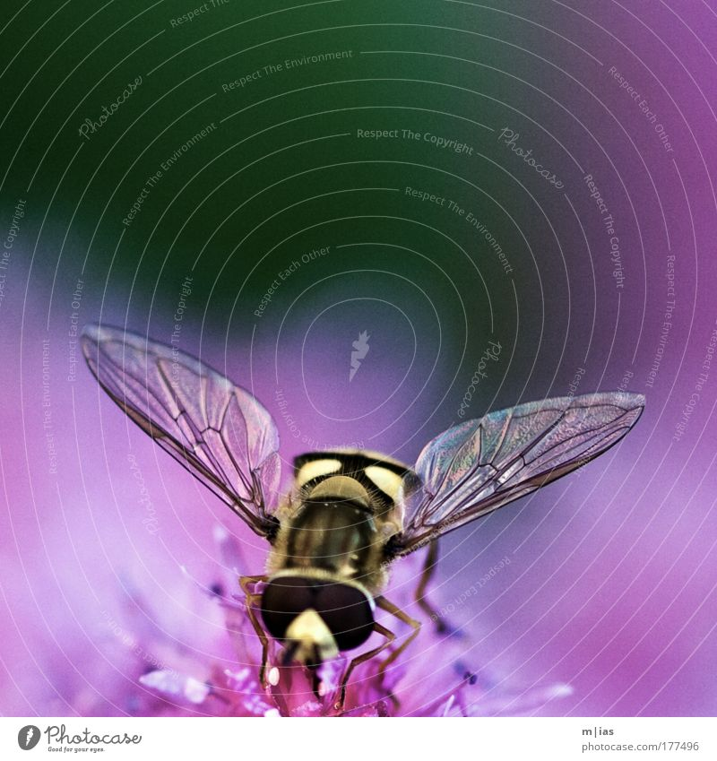 Beautiful Summer Animal Blossom Work and employment Fear Flying Leisure and hobbies Glittering Energy Authentic Esthetic Clean Touch Blossoming Bee