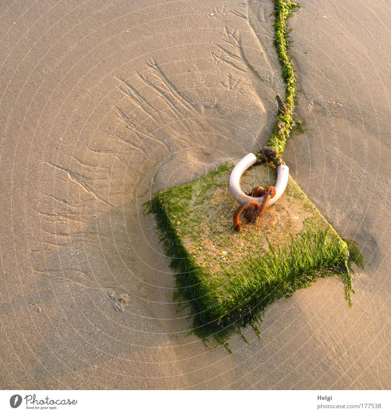 Moss-covered mooring line on a sandy beach Colour photo Subdued colour Exterior shot Detail Deserted Copy Space left Copy Space top Evening Shadow Sunlight