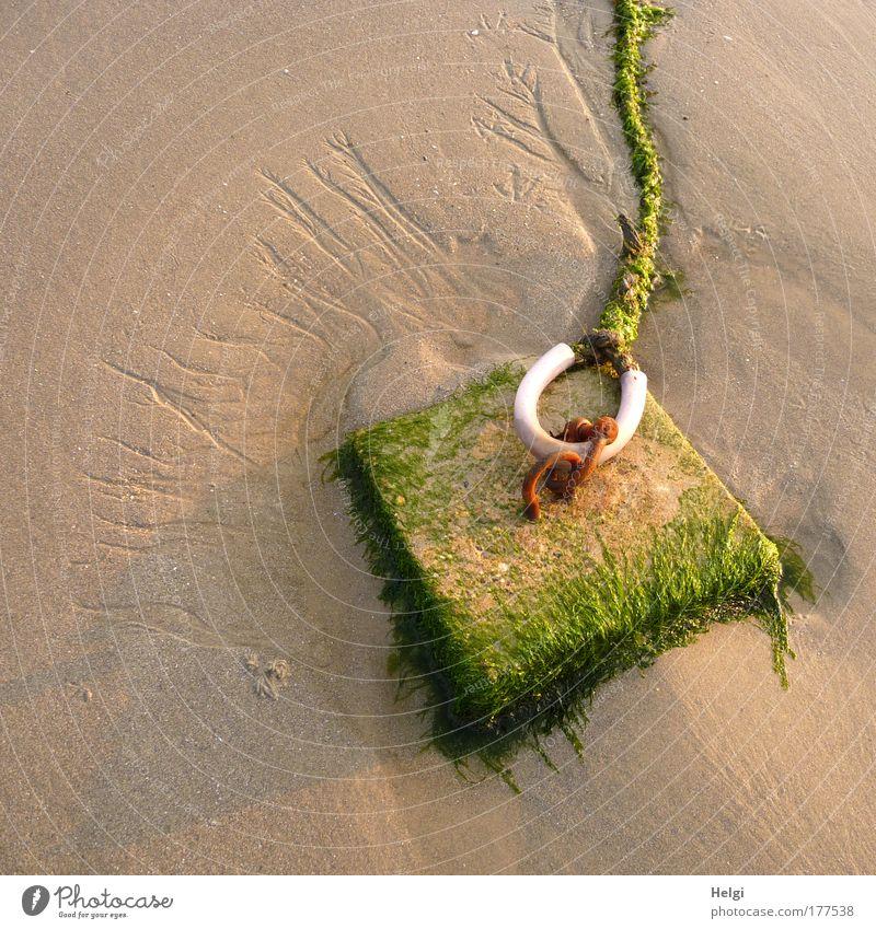 Nature White Green Plant Summer Beach Stone Sand Brown Power Metal Coast Wet Safety Dangerous Lie