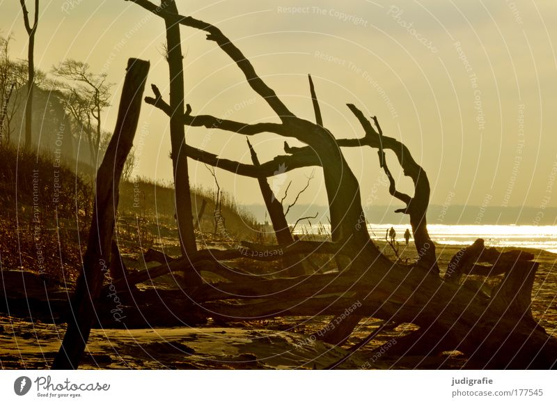 western beach Colour photo Exterior shot Day Evening Vacation & Travel Tourism Beach Ocean Human being 2 Environment Nature Landscape Plant Tree Coast