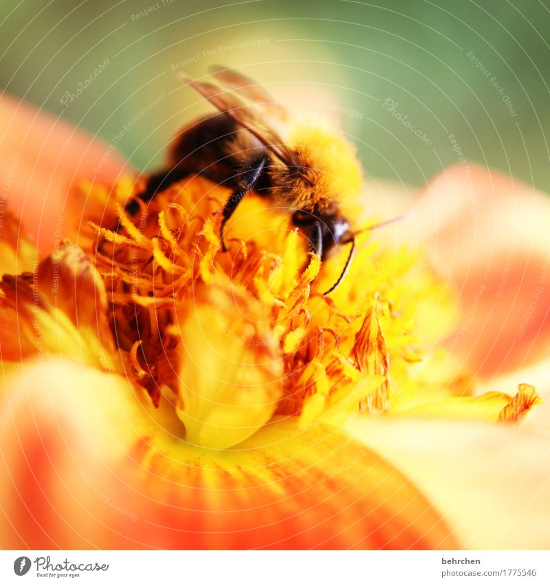 A place in the sun Nature Plant Animal Summer Beautiful weather Flower Leaf Blossom Garden Park Meadow Wild animal Wing Bumble bee 1 Blossoming Fragrance Flying