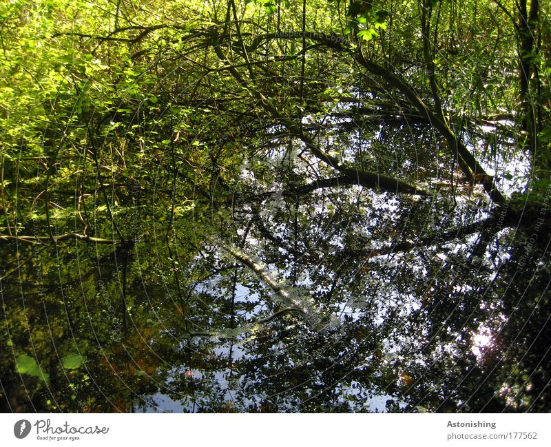 Fell into the water Environment Nature Landscape Plant Water Sky Climate Beautiful weather Tree Grass Bushes Wild plant Forest Pond Brook Broken Wet Blue Brown