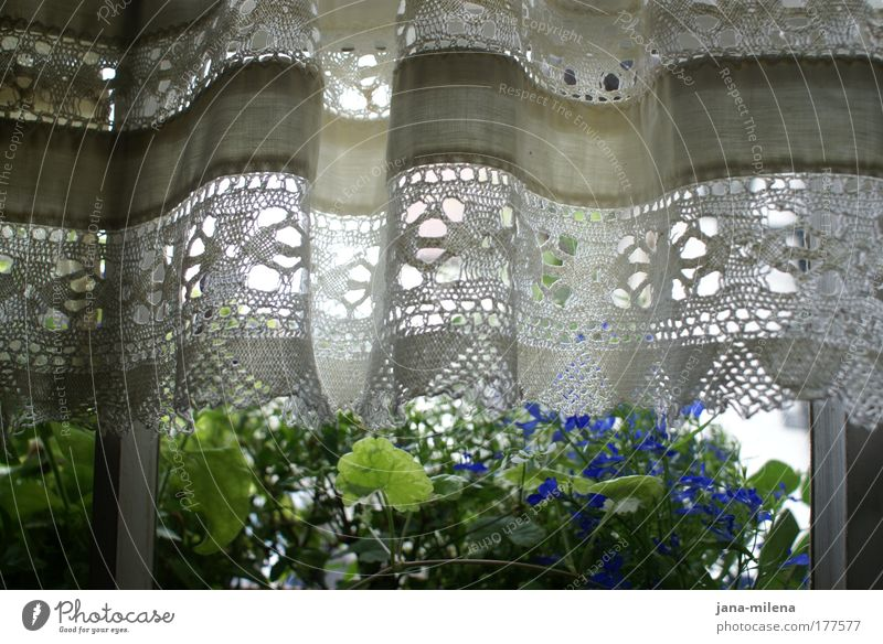 summer outlook Colour photo Subdued colour Interior shot Detail Pattern Deserted Day Light Shadow Contrast Back-light Long shot Nature Spring Summer Plant