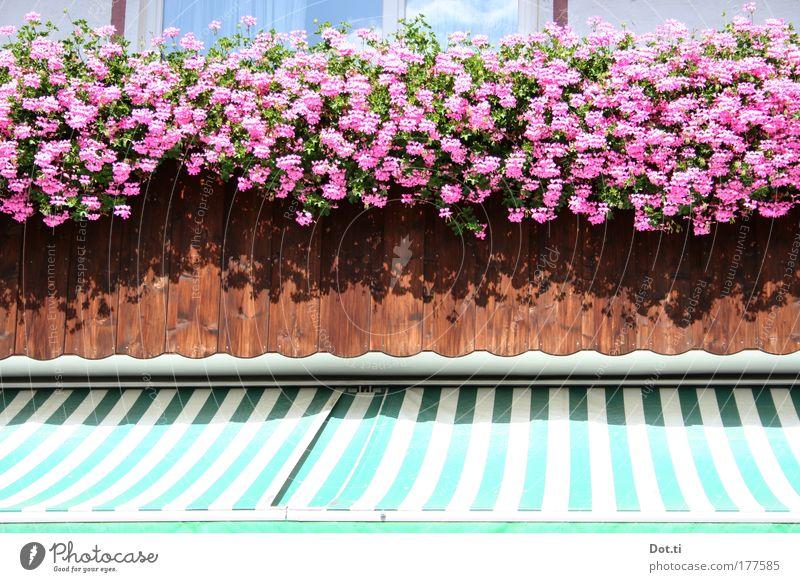 balcony chain Colour photo Multicoloured Exterior shot Detail Deserted Copy Space middle Day Light Sunlight Plant Blossom Pot plant Village