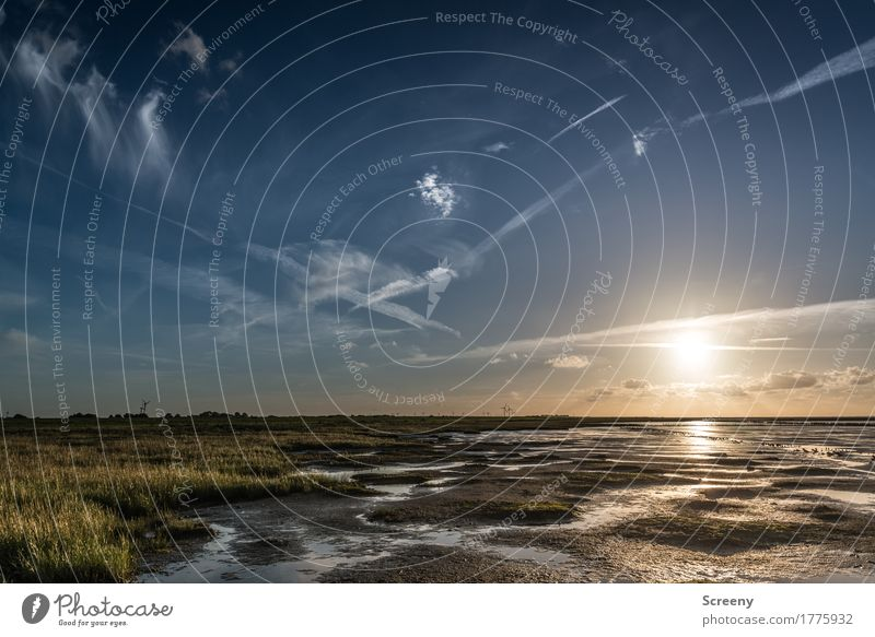 Wadden Sea... Vacation & Travel Tourism Trip Adventure Summer Summer vacation Ocean Hiking Nature Landscape Plant Elements Earth Water Sky Clouds Sunrise Sunset