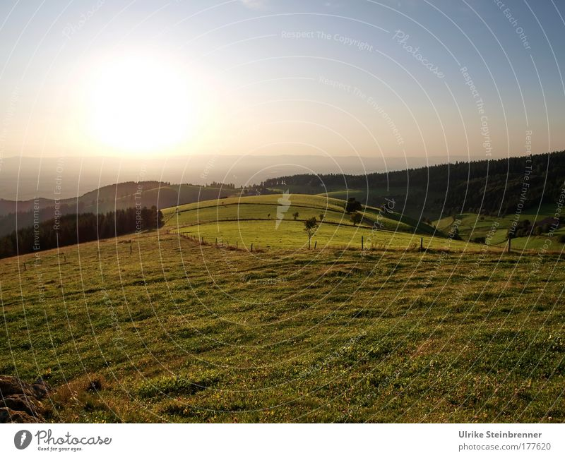 Evening atmosphere with meadows on the Schauinsland in the Black Forest Colour photo Exterior shot Deserted Copy Space top Copy Space bottom Long shot Nature