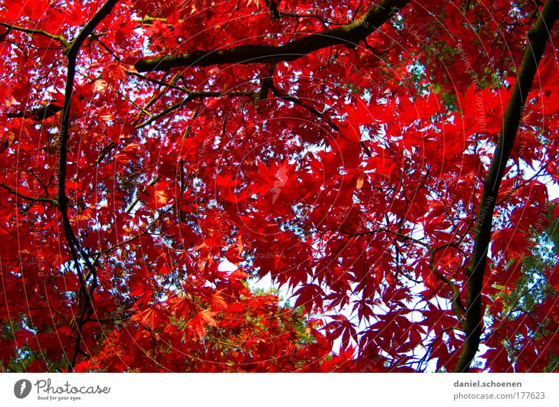 He's at the door. Environment Nature Plant Autumn Tree Leaf Park Forest Red Colour Transience Change Time