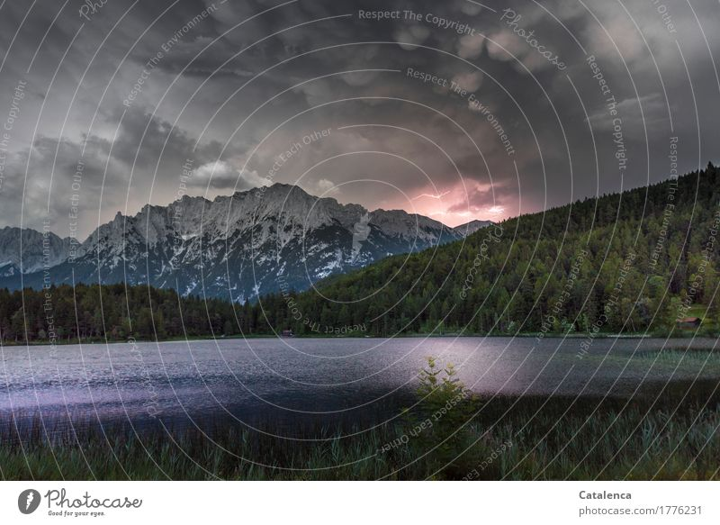 Klangfarbe | Thunderstorm Environment Landscape Elements Water Storm clouds Summer Wind Thunder and lightning Lightning Common Reed Coniferous forest Alps Lake