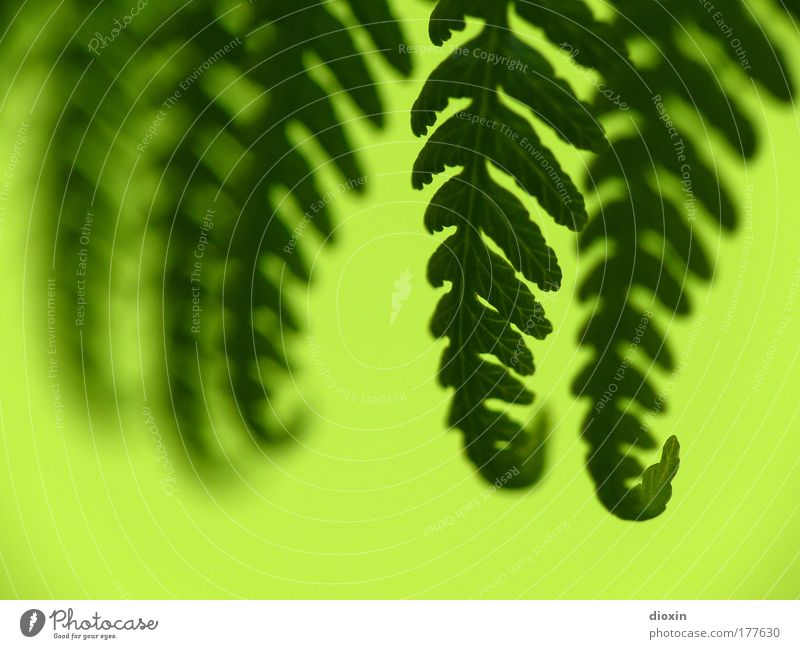 fern-off Colour photo Close-up Detail Deserted Copy Space left Copy Space bottom Silhouette Blur Shallow depth of field Harmonious Well-being Calm Environment