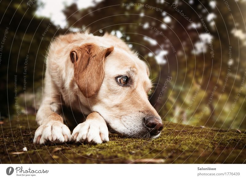 Dog Animal Blonde Longing Pet Snapshot Boredom Hound Puppydog eyes Inattentive