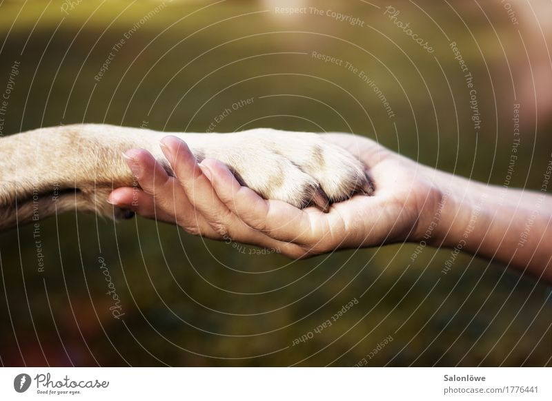 friends Calm Human being Friendship Hand Environment Nature Animal Dog Sign To hold on Communicate Embrace Happy Infinity Emotions Power Trust Sympathy Together