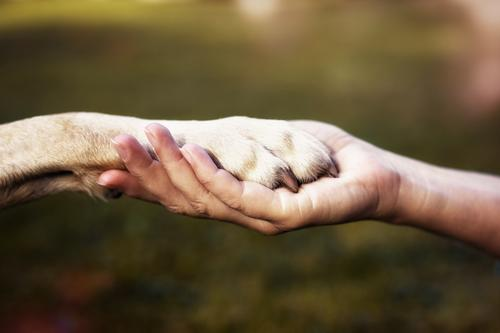 Human being Dog Nature Hand Animal Calm Environment Emotions Love Happy Together Friendship Contentment Power Communicate Sign
