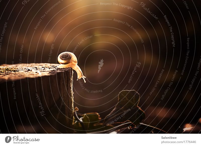 In the peace lies the strength Nature Animal Sunlight Autumn Snail 1 Lanes & trails Barrier Slowly Challenging Slow motion Speed Canyon shiny Tree trunk Wisdom