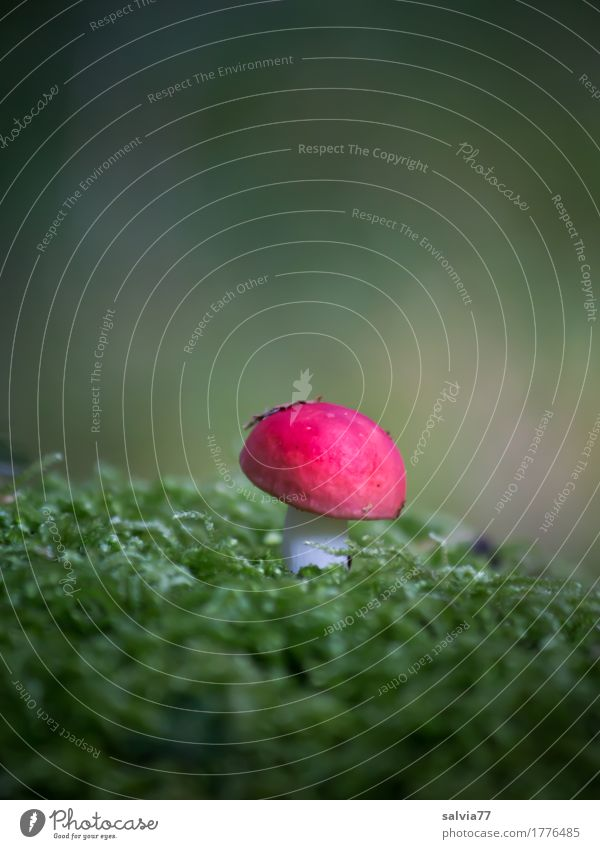 red dwarf Environment Nature Plant Earth Autumn Moss Mushroom Forest Illuminate Growth Natural Green Red Calm Loneliness Idyll Center point Contrast Dwarf
