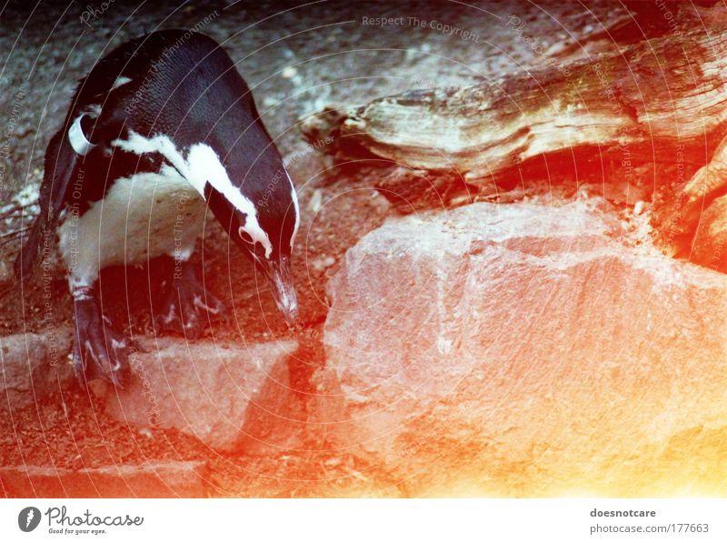 Red Animal Yellow Stone Bird Search Rock Zoo Analog Curiosity Wild animal Film Penguin Patch of light Light leak 35mm film
