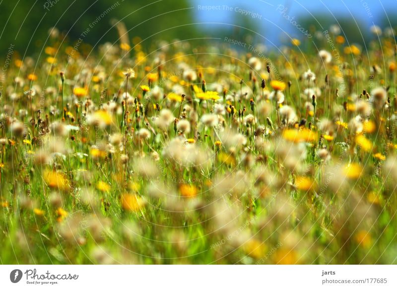 Nature Summer Calm Autumn Grass Landscape Contentment Field Environment Climate Natural Beautiful weather