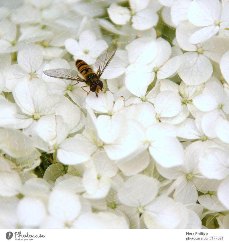 Nature White Flower Plant Summer Animal Blossom Spring Fly Environment Bushes Wing Observe Idyll Bee Environmental protection